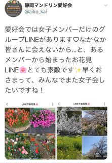 お花見_Twitter.jpg